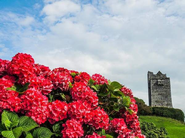 Photograph - Bright Flowers And 14th Century Irish Castle by James Truett