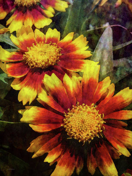 Photograph - Bright Indian Blanket 1515 Idp_2 by Steven Ward