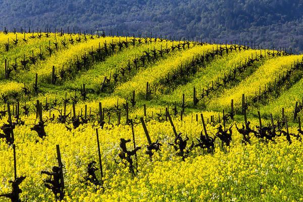 Wall Art - Photograph - Bright Mustard Grass by Garry Gay