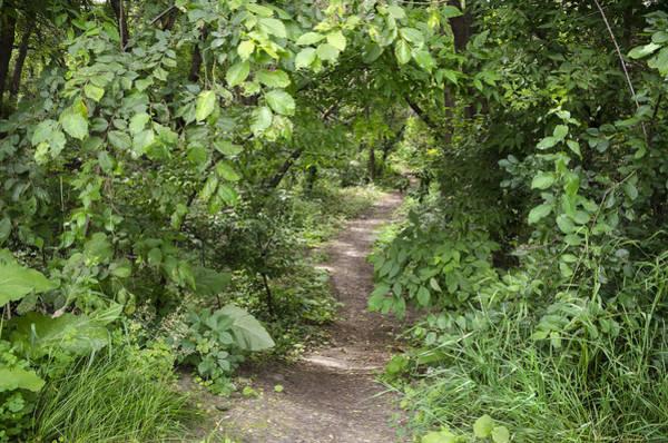 Photograph - Bright Path In Leafy Forest by Lynn Hansen