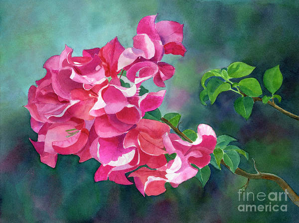 Wall Art - Painting - Bright Pink Bougainvillea With Dark Background by Sharon Freeman