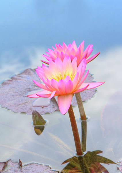 Photograph - Bright Pink by Ree Reid