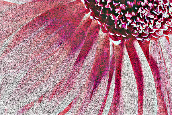 Photograph - Bright Pink Single Chrysanthemum Flower And Petals In Oil Painting Fusion by John Williams