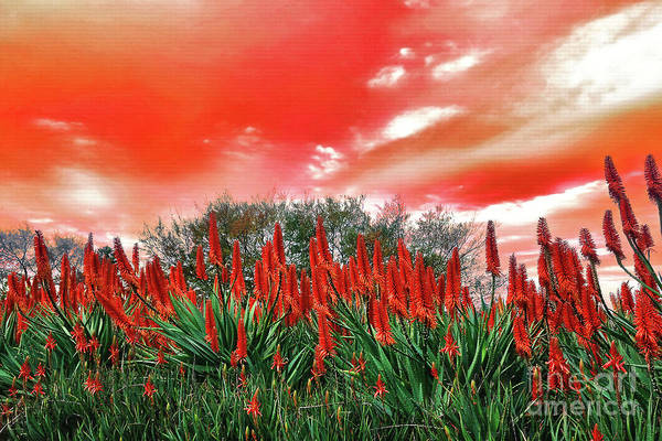 Wall Art - Photograph - Bright Red Aloe Flowers By Kaye Menner by Kaye Menner