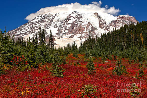 Mt. Adams Photograph - Bright Red In Paradise Valley by Adam Jewell