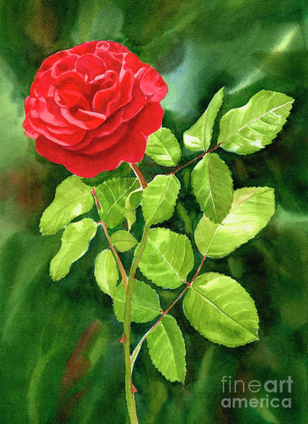 Wall Art - Painting - Bright Red Rose With Dark Background by Sharon Freeman