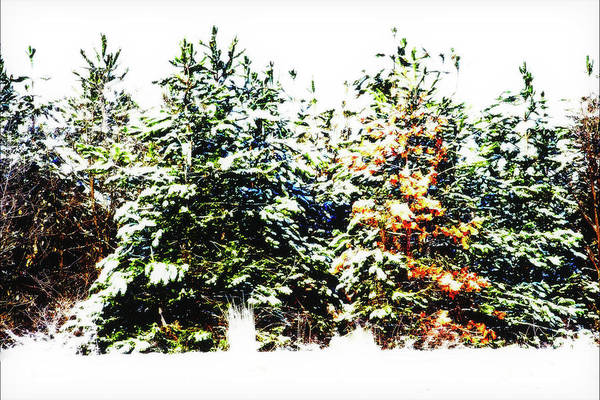 Photograph - Bright Trees by Cliff Norton