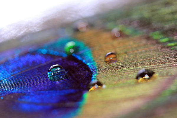 Photograph - Bright Water Drops by Angela Murdock