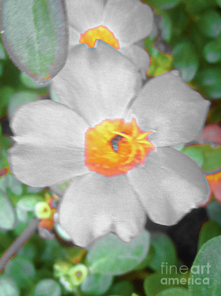 Photograph - Bright White Vinca With Soft Green by James Fannin