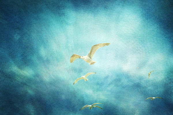 Wall Art - Photograph - Brighton Seagulls by Violet Gray