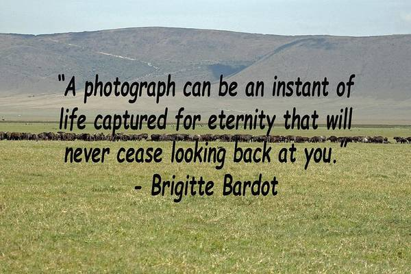 Photograph - Brigitte Bardot Quote by Tony Murtagh