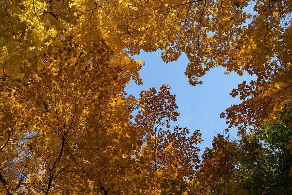 Photograph - Brilliant Autumn Canopy - A Window To The Sky Horizontal by Georgia Mizuleva