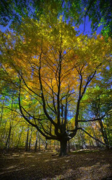 Photograph - Brilliant Autumn Colors by Owen Weber