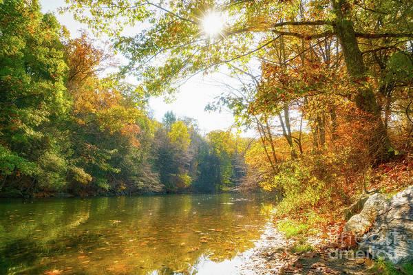 Wall Art - Photograph - Brilliant Autumn Pond by DAC Photo