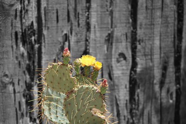 Photograph - Brilliant Yellow by Colleen Cornelius