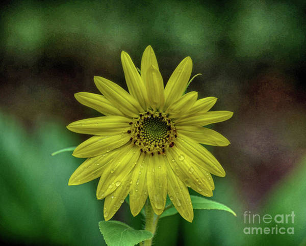 Photograph - Brilliant Yellow Flower by Judy Hall-Folde