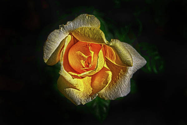Photograph - Brilliant Yellow by Judy Hall-Folde