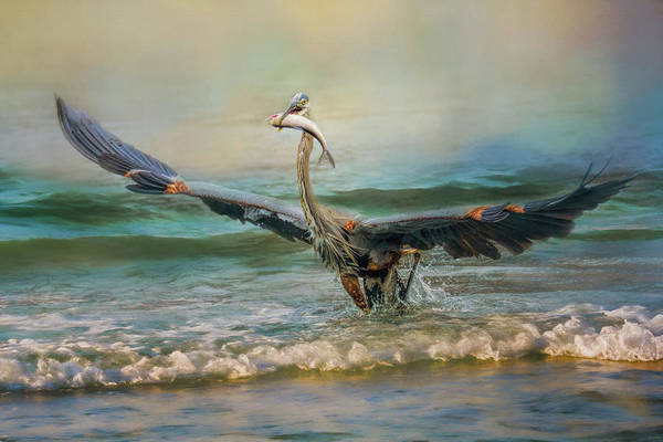 Photograph - Bringing Dinner Home Blue Heron Bird Art by Jai Johnson
