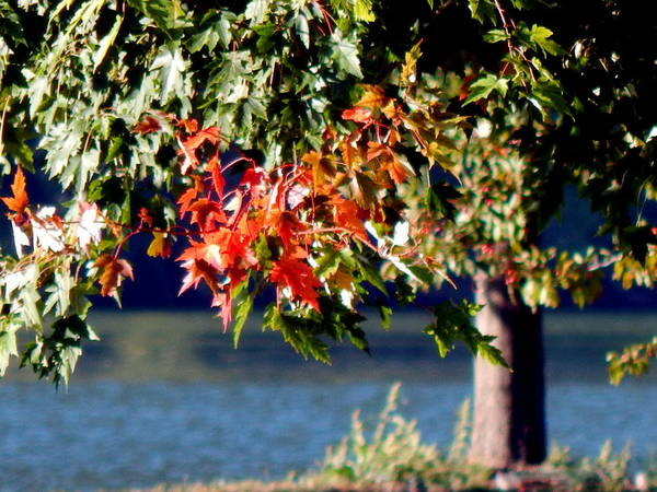Photograph - Brisk Autumn Breeze by Wild Thing
