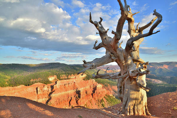 Photograph - Bristlecone Breaks by Ray Mathis