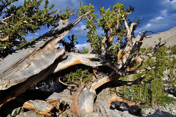 Photograph - Bristlecone Great Basin Landscape by Kyle Hanson