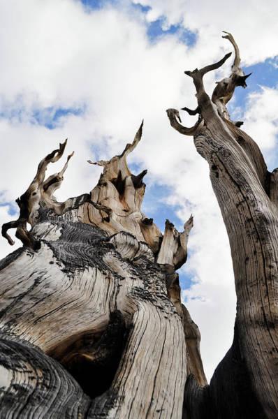 Photograph - Bristlecone Pine Great Basin by Kyle Hanson