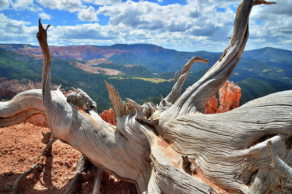 Photograph - Bristlecone With A View by Ray Mathis