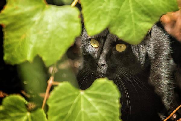 Photograph - Brita's Cat by Belinda Greb