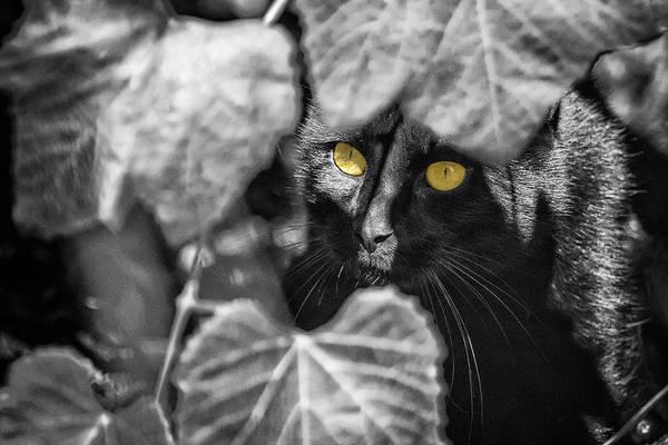 Photograph - Brita's Cat Sbw by Belinda Greb