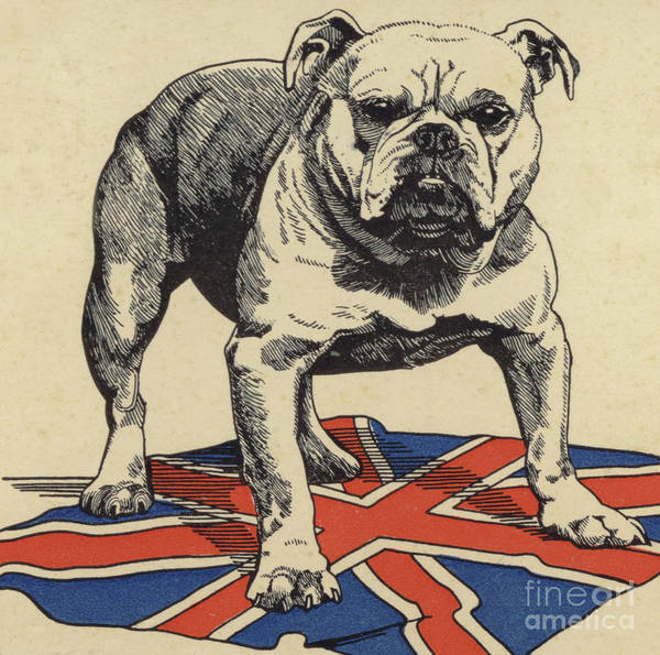Wall Art - Drawing - British Bulldog Standing On The Union Jack Flag by English School