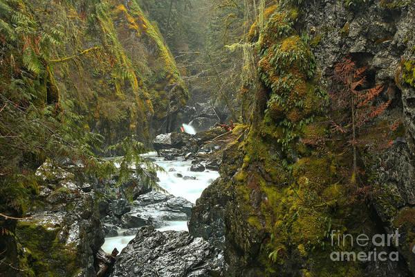 Photograph - British Columbia Englishman River Canyon by Adam Jewell