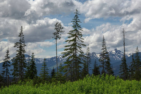 Photograph - British Columbia Forests by Ryan Heffron