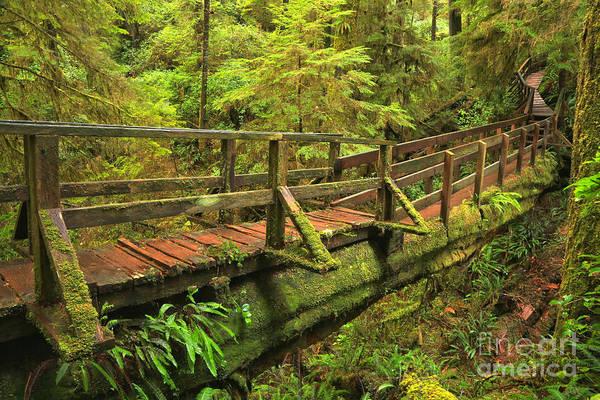 Photograph - British Columbia Rainforest Bridge by Adam Jewell