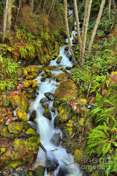 Photograph - British Columbia Rainforest Falls by Adam Jewell