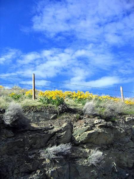 Wall Art - Photograph - British Columbia Sunflowers by Will Borden