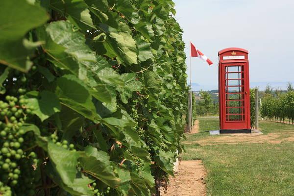 Photograph - British Phone Box by David Matthews