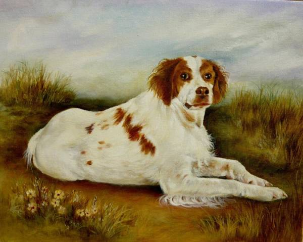 Field Spaniel Painting - Brittany Spaniel   by Holly Way
