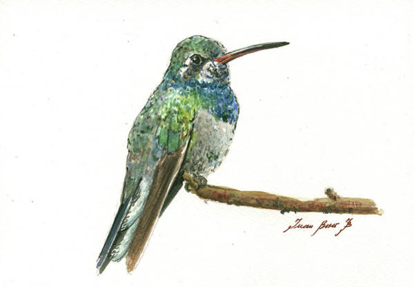 Wall Art - Painting - Broad Billed Hummingbird by Juan Bosco