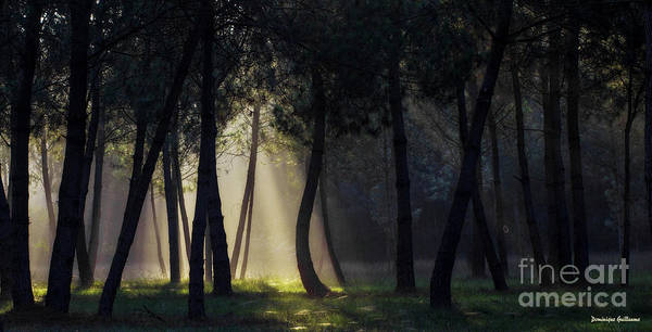 Photograph - Broceliand's Light by Dominique Guillaume