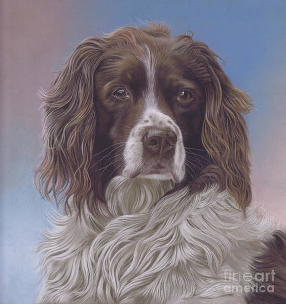 Painting - Brodie by Karie-ann Cooper