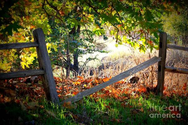 Photograph - Broken Fence In Sycamore Park by Carol Groenen