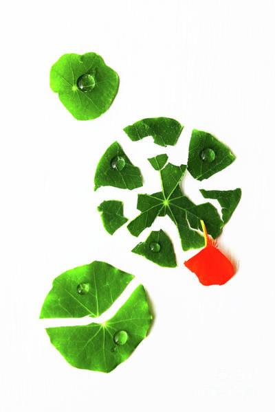 Nasturtiums Wall Art - Photograph - Broken Green Leaves by Masako Metz