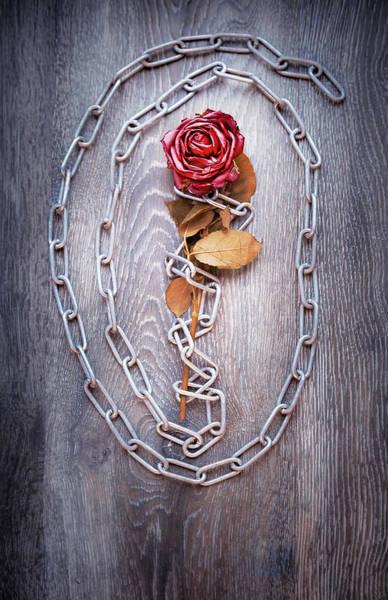 Wall Art - Photograph - Broken Rose by Svetlana Sewell