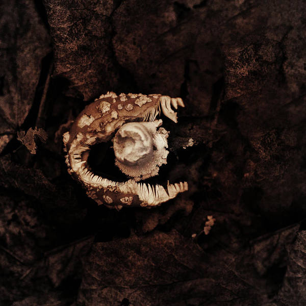 Fungus Photograph - Broken by Susan Capuano