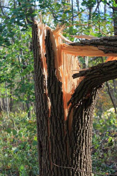 Photograph - Broken Tree by Frank Romeo