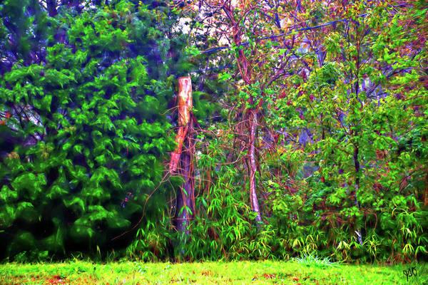 Photograph - Broken Tree by Gina O'Brien