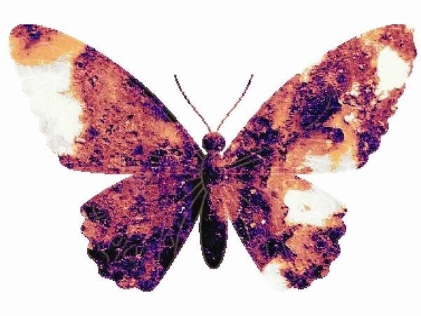 Digital Art - Broken Wings by Robert Grubbs