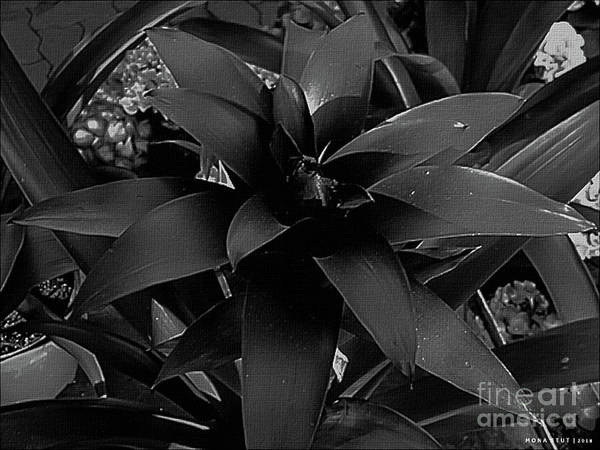 Bromelia Photograph - Bromeliad Bw by Mona Stut
