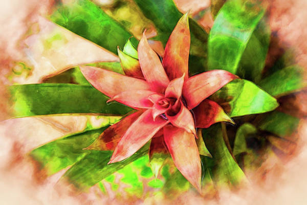 Photograph - Bromeliad Embellished by Kay Brewer