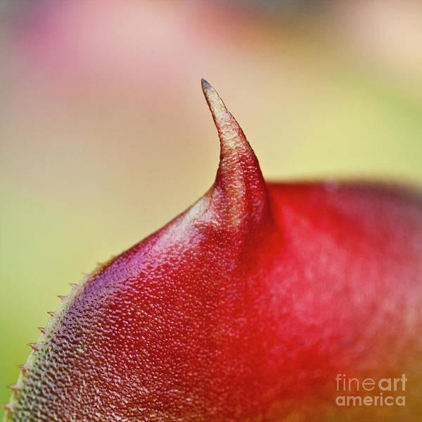 Bromelia Photograph - Bromeliad by Heiko Koehrer-Wagner